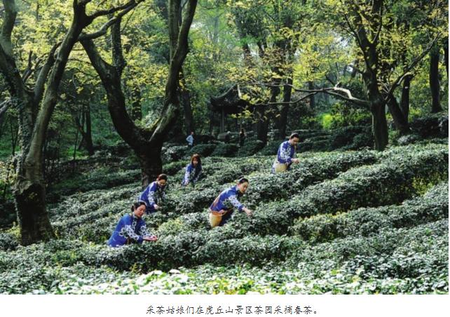 """商标被抢注 苏州虎丘""""白云茶""""商标能否重回原产地"""
