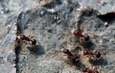 """两只""""蚂蚁""""因商标权打架谁占理 法院:不构成侵权"""