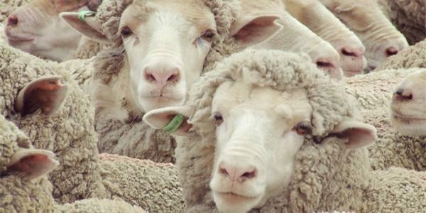 羊毛商标注册属于第几类?
