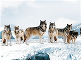 精品商标推荐:七匹狼商标名称有...
