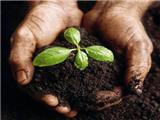 商标买卖推荐:肥料商标交易属于第几类商标