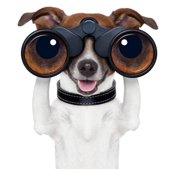 望眼镜商标注册让你领略品牌的力...