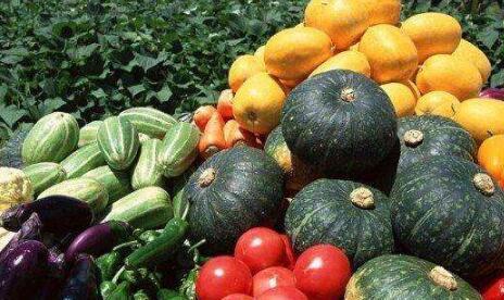 蔬菜种子应属于哪个商标类别?